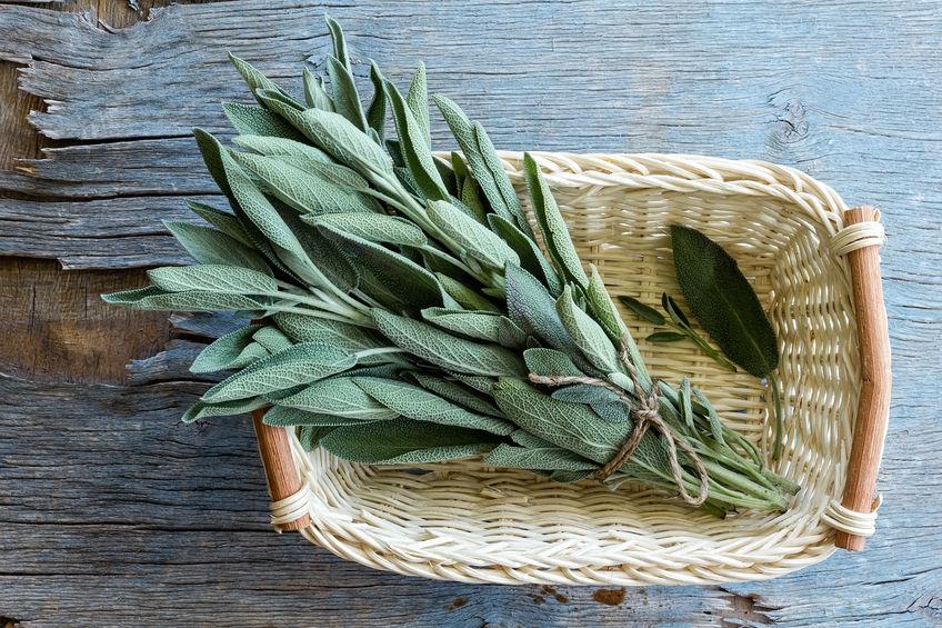 La sauge, l'herbe sacrée pour votre santé
